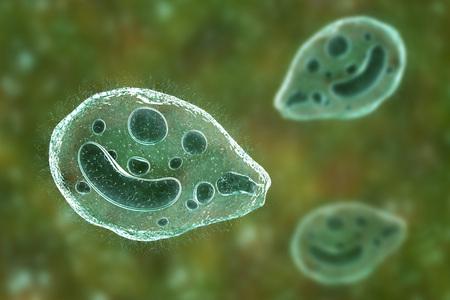 Balantidium coli protozoan, 3D illustration. Ciliated intestinal parasite that causes balantidiasis Stok Fotoğraf