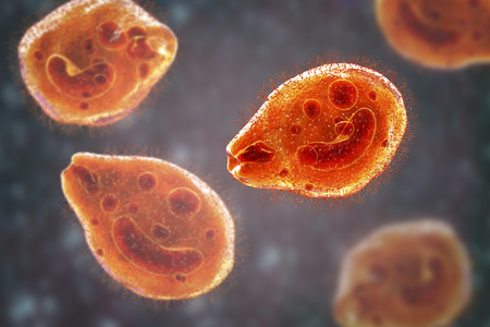 Balantidium coli protozoan, 3D illustration. Ciliated intestinal parasite that causes balantidiasis Stock Photo