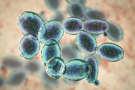 Saccharomyces cerevisiae yeast, 3D illustration. Microscopic fungi, bakers or brewers yeast, are used as probiotics to restore normal flora of intestine