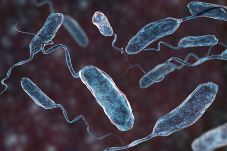 Vibrio cholerae bacteria, 3D illustration. Bacterium which causes cholera disease and is transmitted by contaminated water Stockfoto