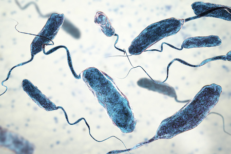 Vibrio cholerae bacteria, 3D illustration. Bacterium which causes cholera disease and is transmitted by contaminated water Archivio Fotografico