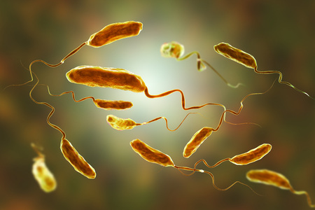 Vibrio cholerae bacteria, 3D illustration. Bacterium which causes cholera disease and is transmitted by contaminated water Foto de archivo