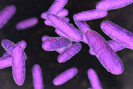 Bacteria Klebsiella granulomatis, the causative agent of sexually transmitted disease granuloma inguinale, 3D illustration Stock Photo