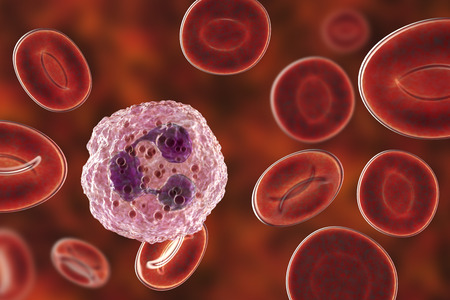 Neutrophil, a white blood cell, 3D illustration. The most abundant type of granulocytes, has phagocyting activity, takes part in inflammation Stock Photo