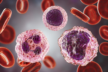 Monocyte right , lymphocyte upper middle and neutrophil left surrounded by red blood cells, 3D illustration