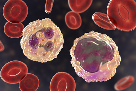 Monocyte right and neutrophil left surrounded by red blood cells, 3D illustration Stock Photo