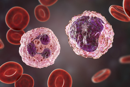 Monocyte right and neutrophil left surrounded by red blood cells, 3D illustration