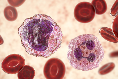 Monocyte left and neutrophil right surrounded by red blood cells, 3D illustration Stock Illustration - 110588265