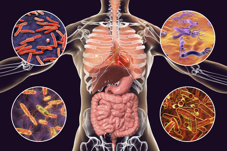 Human pathogenic microbes, respiratory and enteric pathogens, 3D illustration. Mycobacterium tuberculosis, Helicobacter pylori, Salmonella, Shigella