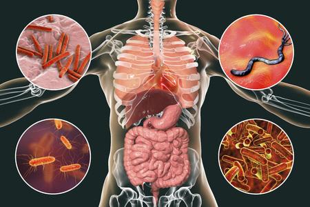 Human pathogenic microbes, respiratory and enteric pathogens, 3D illustration. Mycobacterium tuberculosis, Helicobacter pylori, Escherichia coli, Shigella