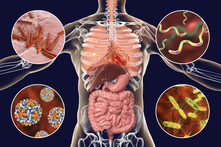 Human pathogenic microbes, respiratory, enteric and liver pathogens, 3D illustration. Mycobacterium tuberculosis, Helicobacter pylori, Hepatitis B viruses, Salmonella Stock Photo