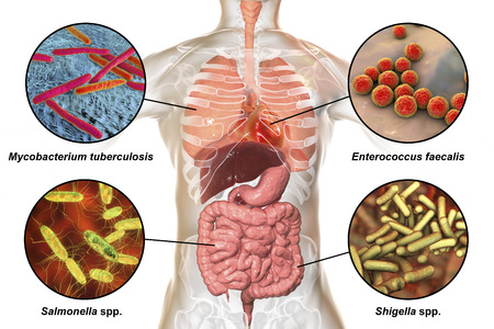 Human pathogenic microbes, bacteria causing respiratory and enteric infections, infective endocarditis, 3D illustration. Mycobacterium tuberculosis, Enterococcus faecalis, Salmonella, Shigella