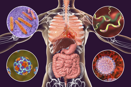 Human pathogenic microbes, respiratory, enteric and liver pathogens, 3D illustration. Mycobacterium tuberculosis, Helicobacter pylori, Hepatitis A viruses, Rotaviruses