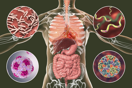 Human pathogenic microbes, respiratory, enteric and liver pathogens, 3D illustration. Mycobacterium tuberculosis, Helicobacter pylori, Hepatitis A viruses, Rotaviruses Stock Photo