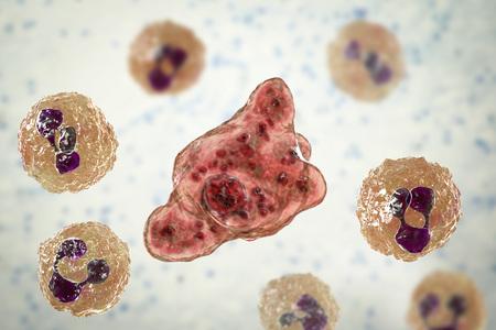 Cerebrospinal fluid smear containing trophozoites of brain-eating amoeba Naegleria fowleri and neutrophils, 3D illustration