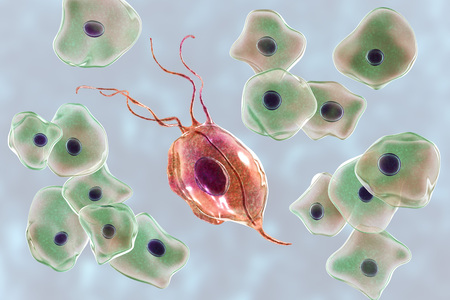 Trichomonas tenax in buccal smear, a protozoan found in the oral cavity and associated with periodontal diseases, 3D illustration showing Trichomonas surrounded by epithelial cells