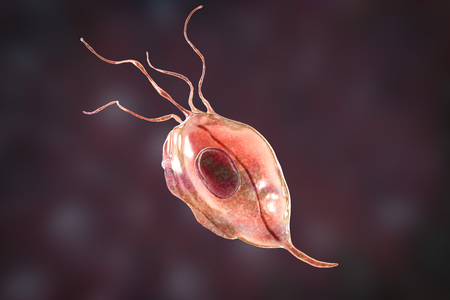 Trichomonas tenax, a protozoan found in the oral cavity and associated with periodontal diseases, 3D illustration Stock Photo