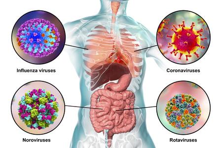 Humanpathogene Viren, die Atemwegs- und Darminfektionen verursachen, 3D-Darstellung