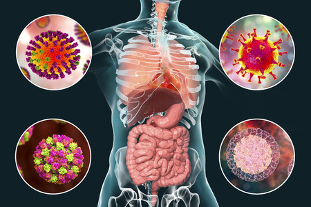 Human pathogenic viruses causing respiratory and enteric infections, 3D illustration