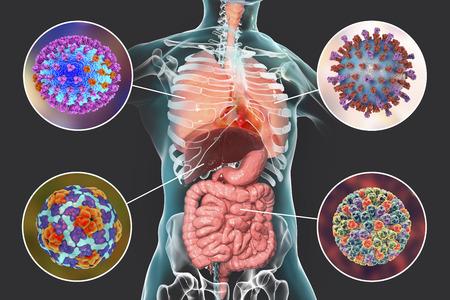 Virus pathogènes humains causant des infections respiratoires et entériques, illustration 3D Banque d'images