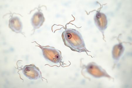 Pentatrichomonas hominis protozoan, 3D illustration. Also known as Trichomonas hominis or T. intestinalis, colonizes human large intestine, usually asymptomatic but may cause diarrhea