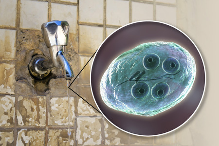 Safety of drinking water concept, 3D illustration showing cysts of Giardia intestinalis protozoan, the causative agent of giardiasis and diarrhea, contaminating drinking water Stock Illustration - 112725172