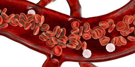 Globules rouges et leucocytes, coupe transversale d'un vaisseau sanguin, illustration 3D Banque d'images