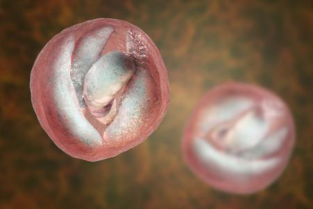 Cryptosporidium parvum oocyst, 3D illustration. Cryptosporidium is a protozoan, microscopic parasite, the causative agent of the diarrheal disease cryptosporidiosis