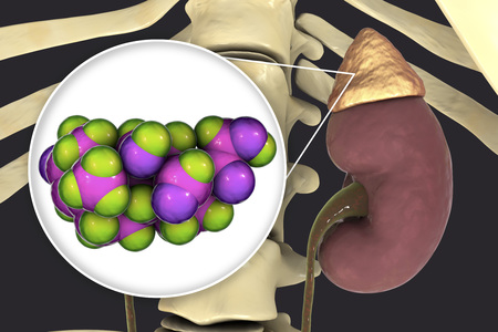 Aldosterone hormone, mineralocorticoid hormone produced by adrenals, 3D illustration