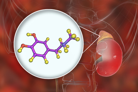 Epinephrine hormone produced by adrenal gland, 3D illustration. It has effect on blood pressure, lypolysis, glycogenolysis