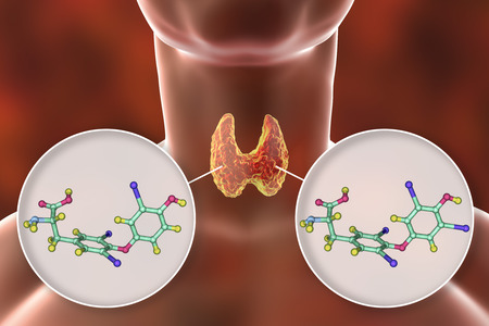 Molecules of thyroid hormones T3 and T4. Triiodothyronine and thyroxine, 3D illustration Stock Photo