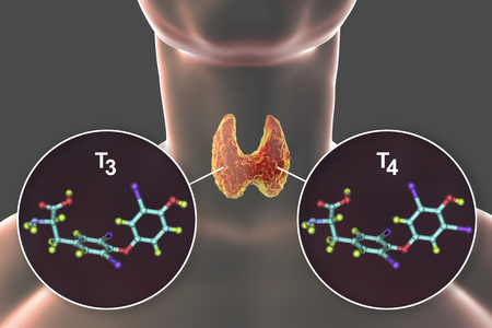 Molecules of thyroid hormones T3 and T4. Triiodothyronine and thyroxine, 3D illustration Banco de Imagens