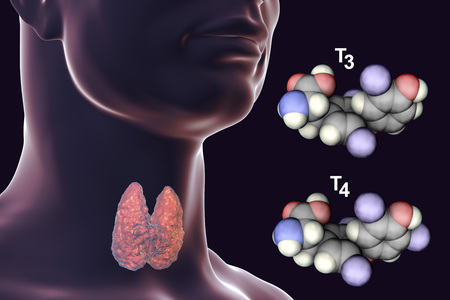 Molecules of thyroid hormones T3 and T4. Triiodothyronine and thyroxine, 3D illustration Zdjęcie Seryjne - 115153671
