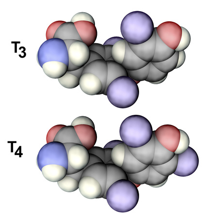 Molecules of thyroid hormones T3 and T4, 3D illustration. Triiodothyronine and thyroxine Stock Photo