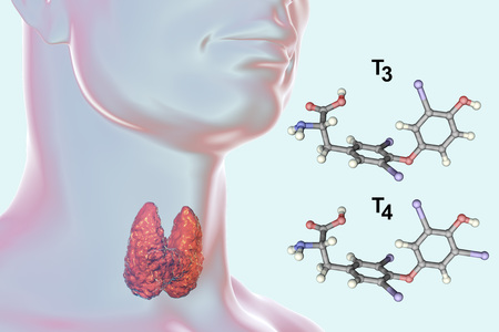 Molecules of thyroid hormones T3 and T4. Triiodothyronine and thyroxine, 3D illustration Stockfoto
