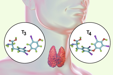 Molecules of thyroid hormones T3 and T4. Triiodothyronine and thyroxine, 3D illustration Stock fotó