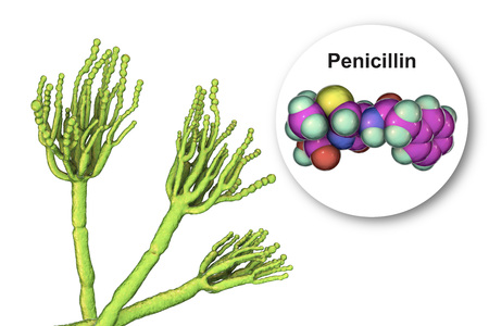 Fungi Penicillium producing penicillin antibiotic, 3D illustration Reklamní fotografie