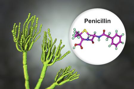 Fungi Penicillium producing penicillin antibiotic, 3D illustration Stock Photo