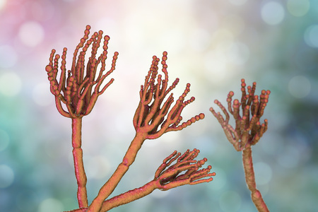 Fungi Penicillium which cause food spoilage and are used for production of the first antibiotic penicillin. 3D illustration showing spores conidia and conidiophore Reklamní fotografie