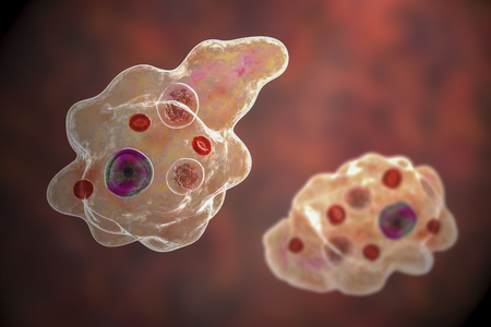 Entamoeba gingivalis protozoan, 3D illustration. An amoeba found in mouth and associated with periodontal diseases Stock Photo