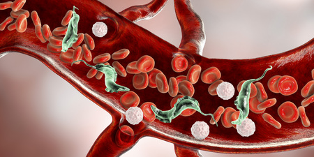 Trypanosoma cruzi parasites in blood, 3D illustration. A protozoan that causes Chagas' disease transmitted to humans by the bite of triatomine bug Foto de archivo