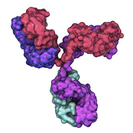Molecular model of antibody taking part in immune defense. Molecule of immunoglobulin, 3D illustration Foto de archivo - 118091073