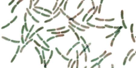 Bacteria Lactobacillus, 3D illustration. Normal flora of small intestine, lactic acid bacteria. Probiotic bacterium Stock Photo