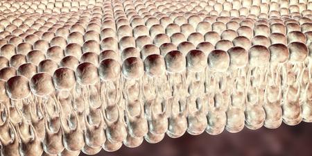 Cell membrane, lipid bilayer, close-up view. 3D illustration