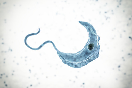 Trypanosoma brucei parasite, 3D illustration. A protozoan that is transmitted by tse-tse fly and causes African sleeping sickness Standard-Bild - 118096110