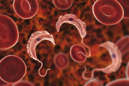Trypanosoma brucei parasites, 3D illustration. A protozoan that is transmitted by tse-tse fly and causes African sleeping sickness