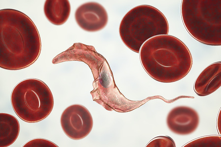 Trypanosoma cruzi parasite, 3D illustration. A protozoan that causes Chagas disease transmitted to humans by the bite of triatomine bug Stock Photo