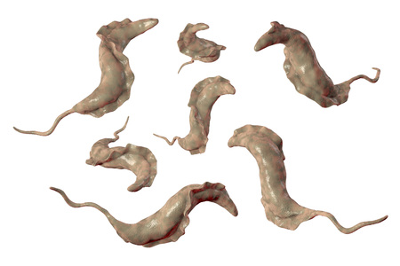 Trypanosoma cruzi parasites, 3D illustration. A protozoan that causes Chagas disease transmitted to humans by the bite of triatomine bug