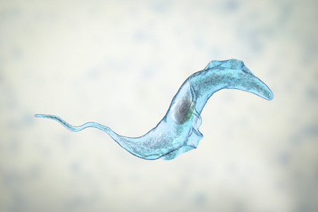 Trypanosoma cruzi parasite, 3D illustration. A protozoan that causes Chagas disease transmitted to humans by the bite of triatomine bug Zdjęcie Seryjne