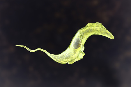 Trypanosoma cruzi parasite, 3D illustration. A protozoan that causes Chagas disease transmitted to humans by the bite of triatomine bug 版權商用圖片